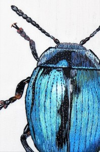 silk shading beetle
